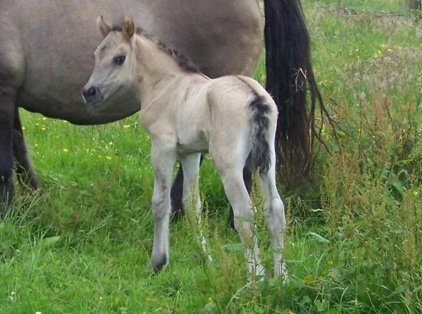 Mollys colt foal
