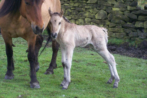 Rubys filly new born