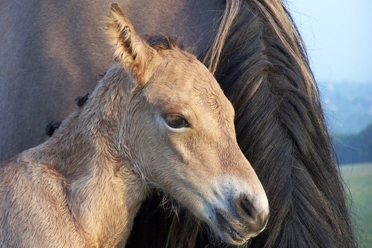 Bryony of Combebanks filly foal new born