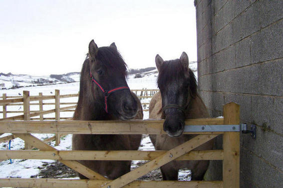 Kyla and Peggy Febuary 2008
