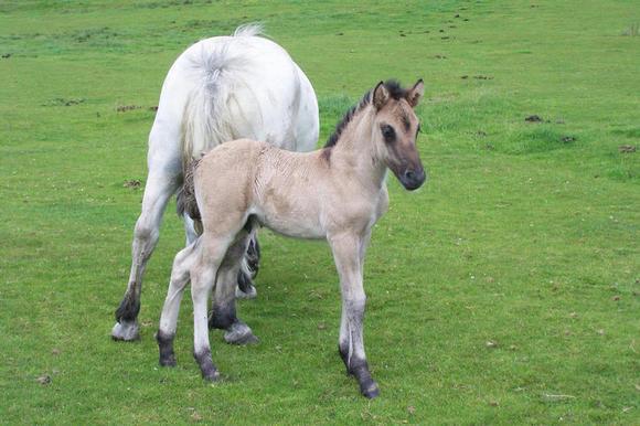 Colt foal Jack