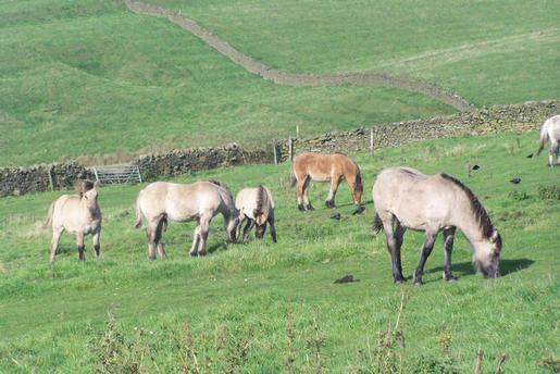 foals grazing