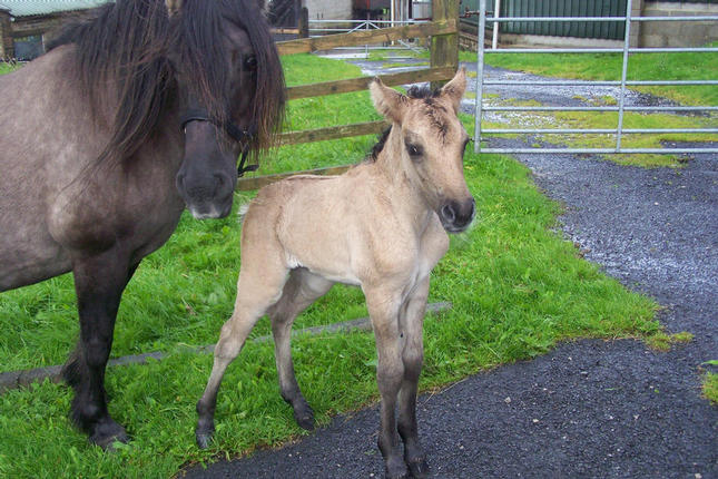 Mollys filly