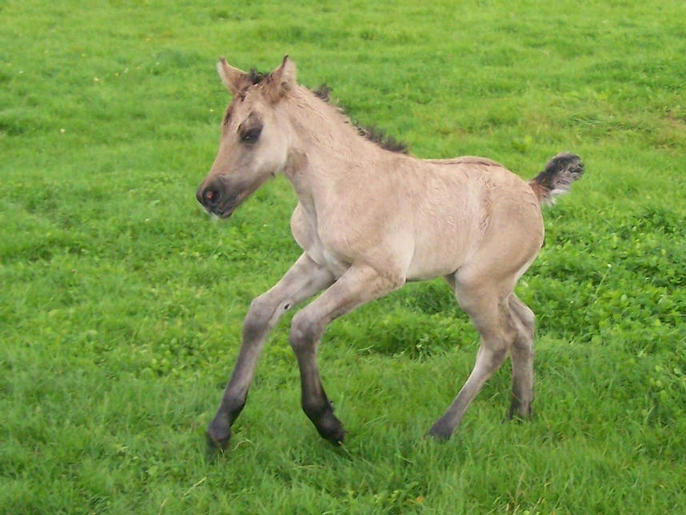 Filly foal by Drumochter
