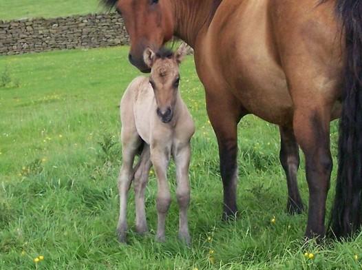 Valerock Sweet Briars colt foal new born