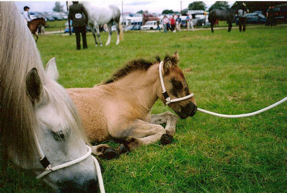 Blossom and foal