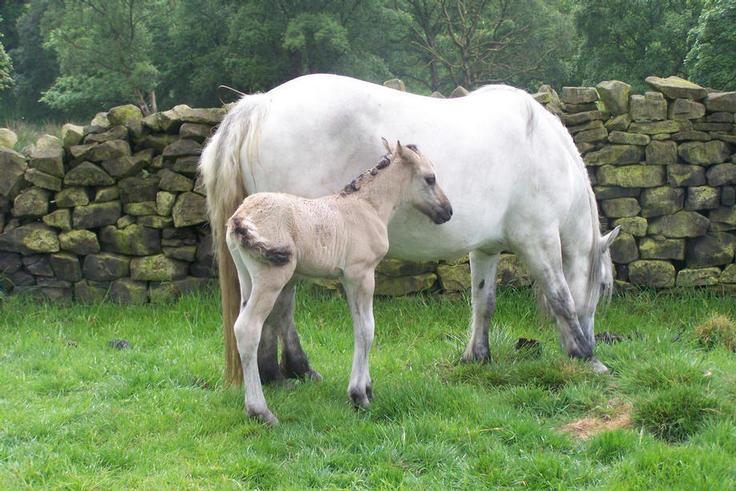 Velvets colt foal