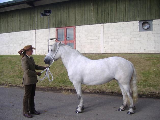 Valerock Velvet Royal Highland