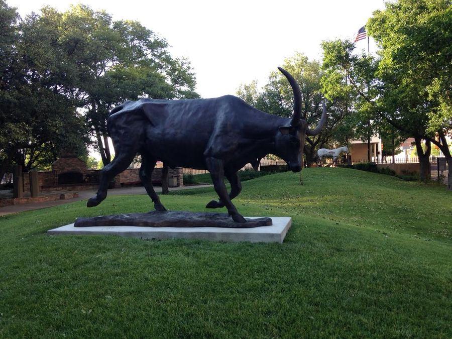 Longhorn steer.