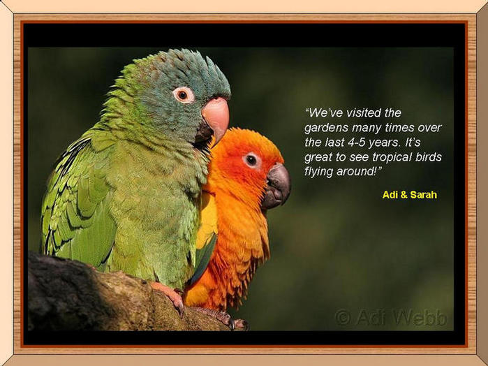 Photo of two parrots