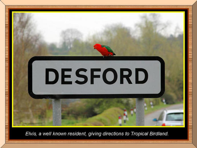 Photo of 'Elvis' on the Desford sign.