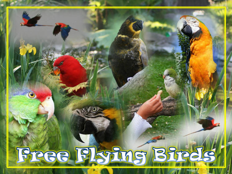 Free Flying Birds