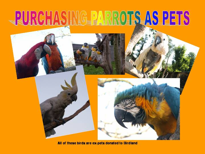 Photographs of different parrots.