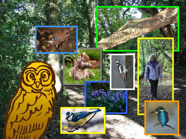 Photographs of some of the wildlife that can be seen on the Woodland Walk.