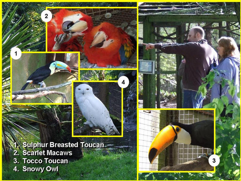 Pictures of birds that can be seen.