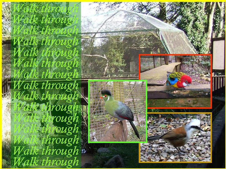 Photo of Walk Through Aviaries and some of the birds inside.