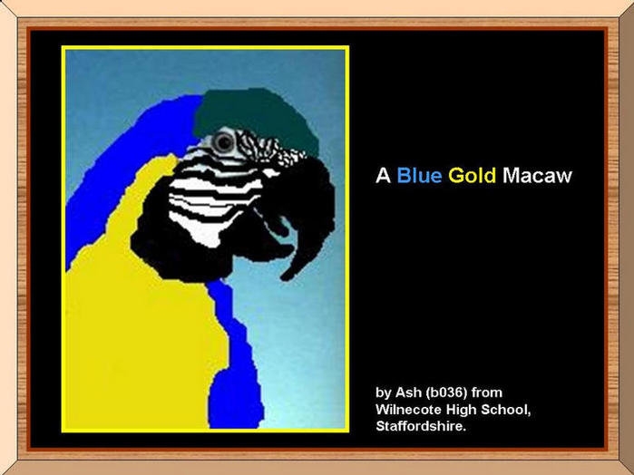 Painting of Blue Gold Macaw.