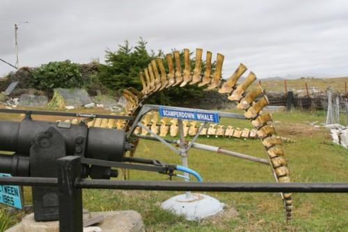 Scamperdown Whale skeleton