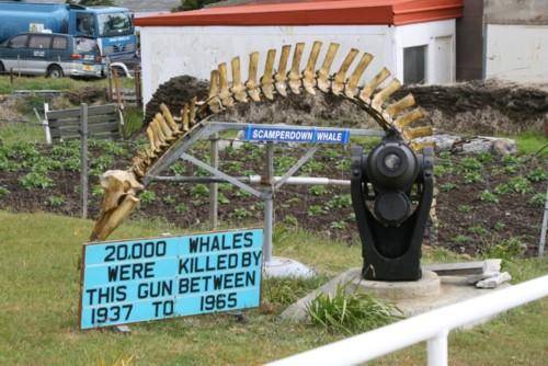 Whale Gun and Scamperdown Whale