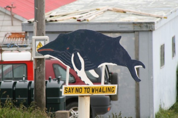 Whale Sign