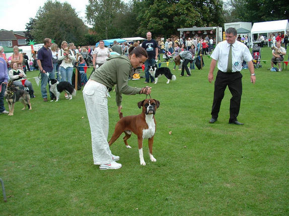 Dog Shows In Southern Ireland