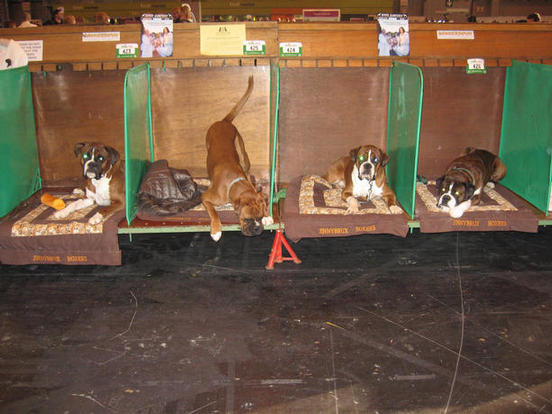 Four on bench, Crufts
