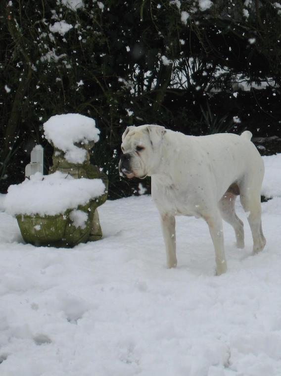 Daisy in the snow