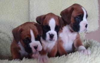 Three Giles babies