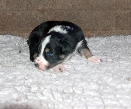 Dog pup 4