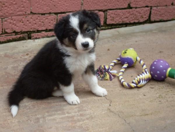Dog 3 sold