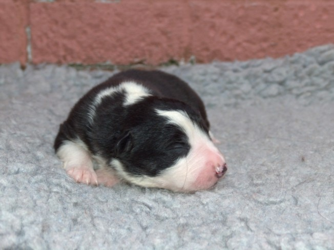 Dog Pup 2