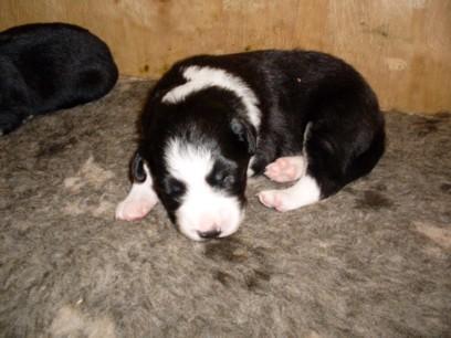Dog pup 1