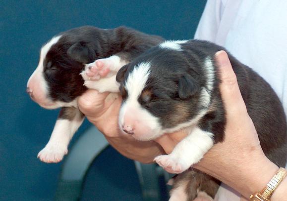 Pups 1 week