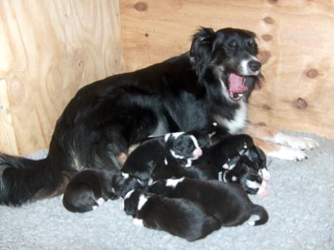 Mum & pups