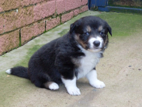 Dave 4 wks sold