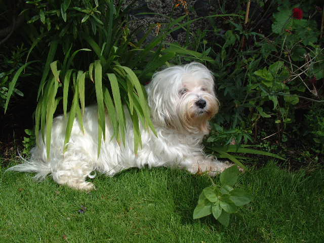My sophie dog