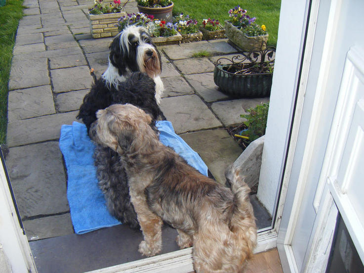 Molly waiting for her new mum, with Dooby & Sasha