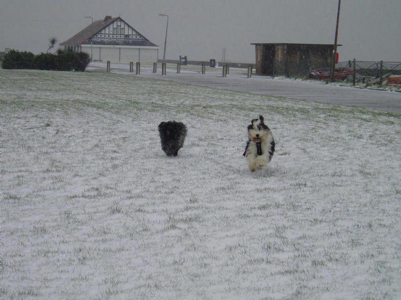 Fun running in the snow