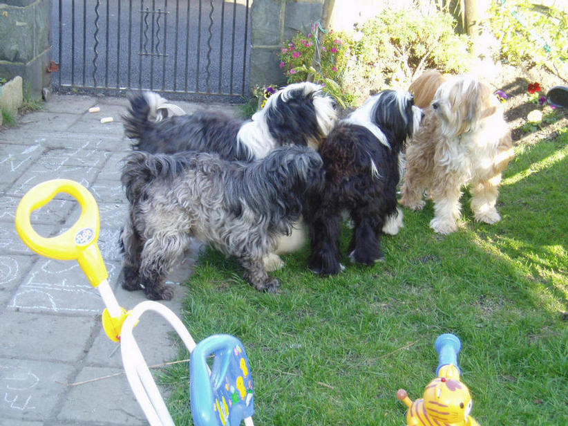 Dooby, Sasha, Alfie, Hovis