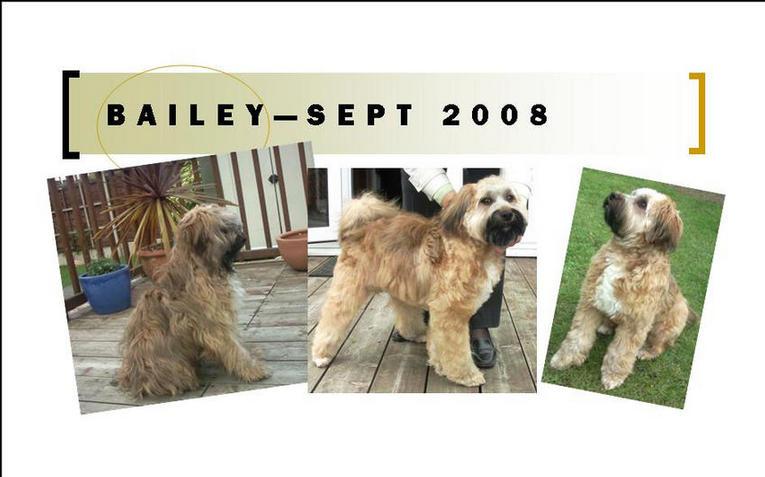 Bailey, Sept 2008