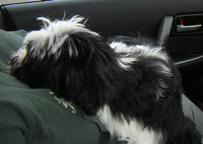 Bertie (BB) rehomed to Shropshire in March 08