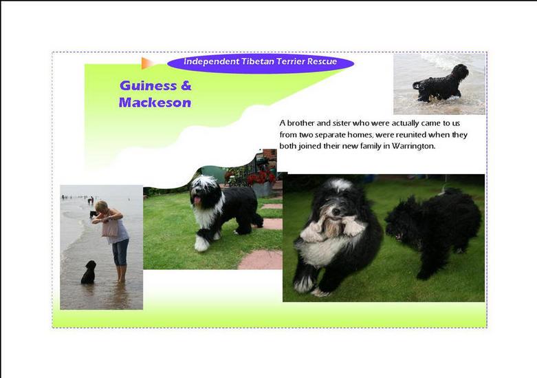 Guinness & Mackeson