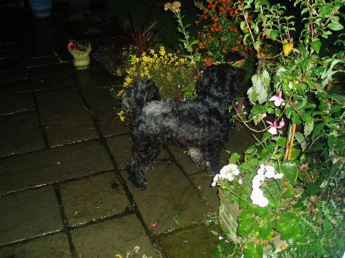 Herbie in the garden in the dark