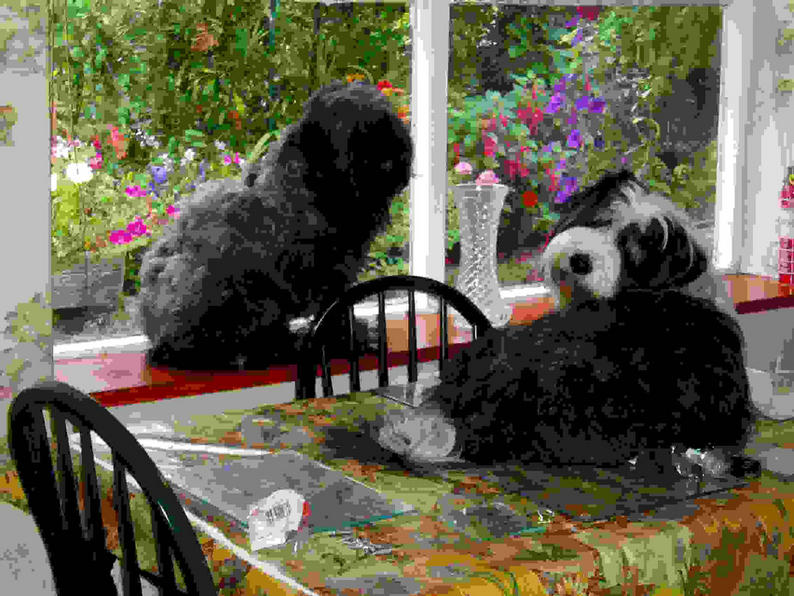 Bad dogs on table