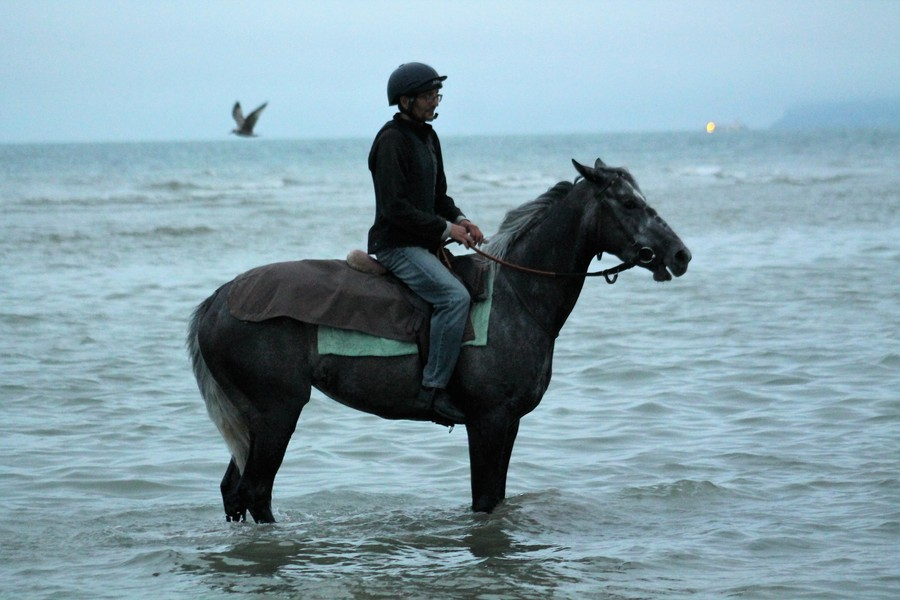DALSTAR relaxes in the sea at DEAUVILLE after her gallant 2nd