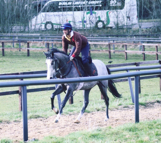 Last Act on the gallops at the Airlie Stud