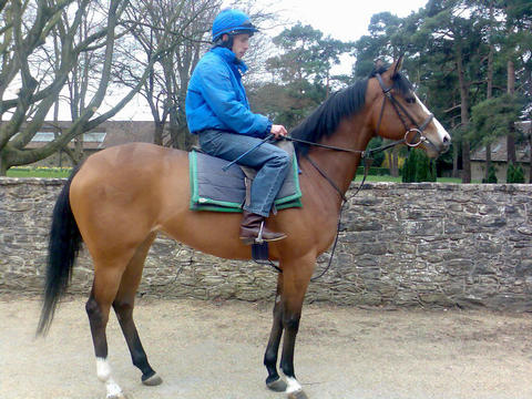 Our new HERNANDO filly arrives at Conkwell Grange stables