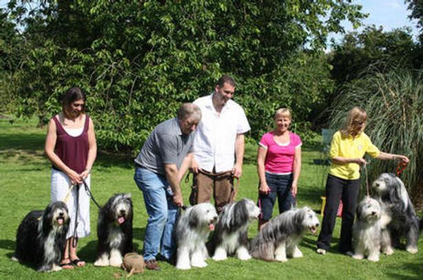 BEARDED COLLIES GALLERY