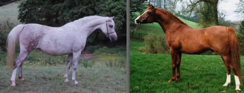 Foals 2011